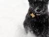 raven_snowy_2014a