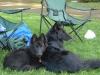 Rogue & Chilko